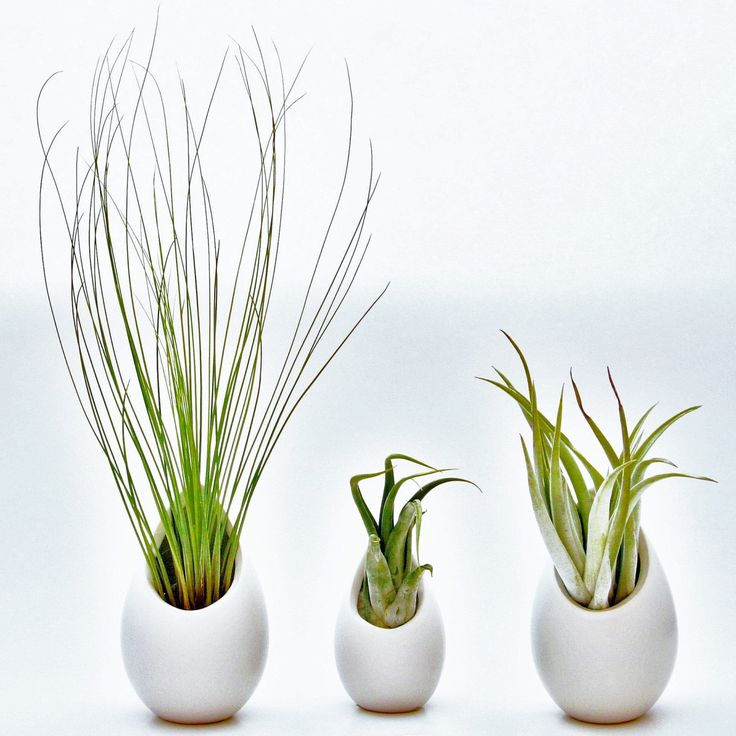 hanging air plant container 2 large 1 mini ceramic vases