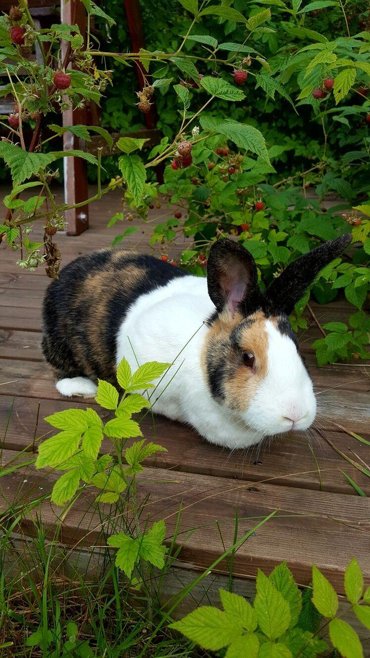 Bunny William