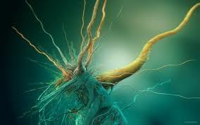 Beautiful bacteria