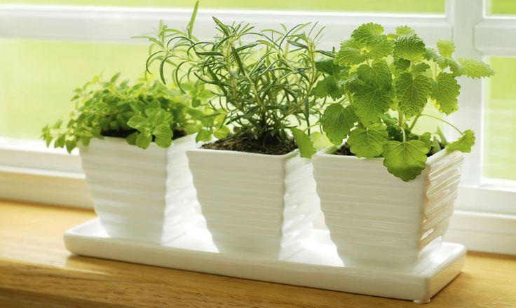Vypěstujte si bylinky usebe doma - Tesco recepty