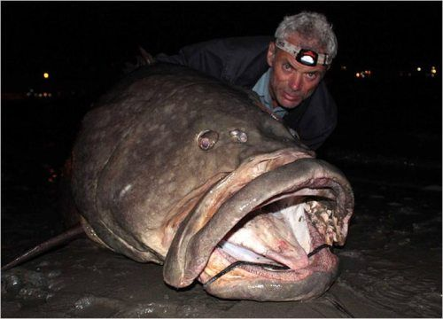 Jeremy Wade (from River Monsters) and a HUGE grouper