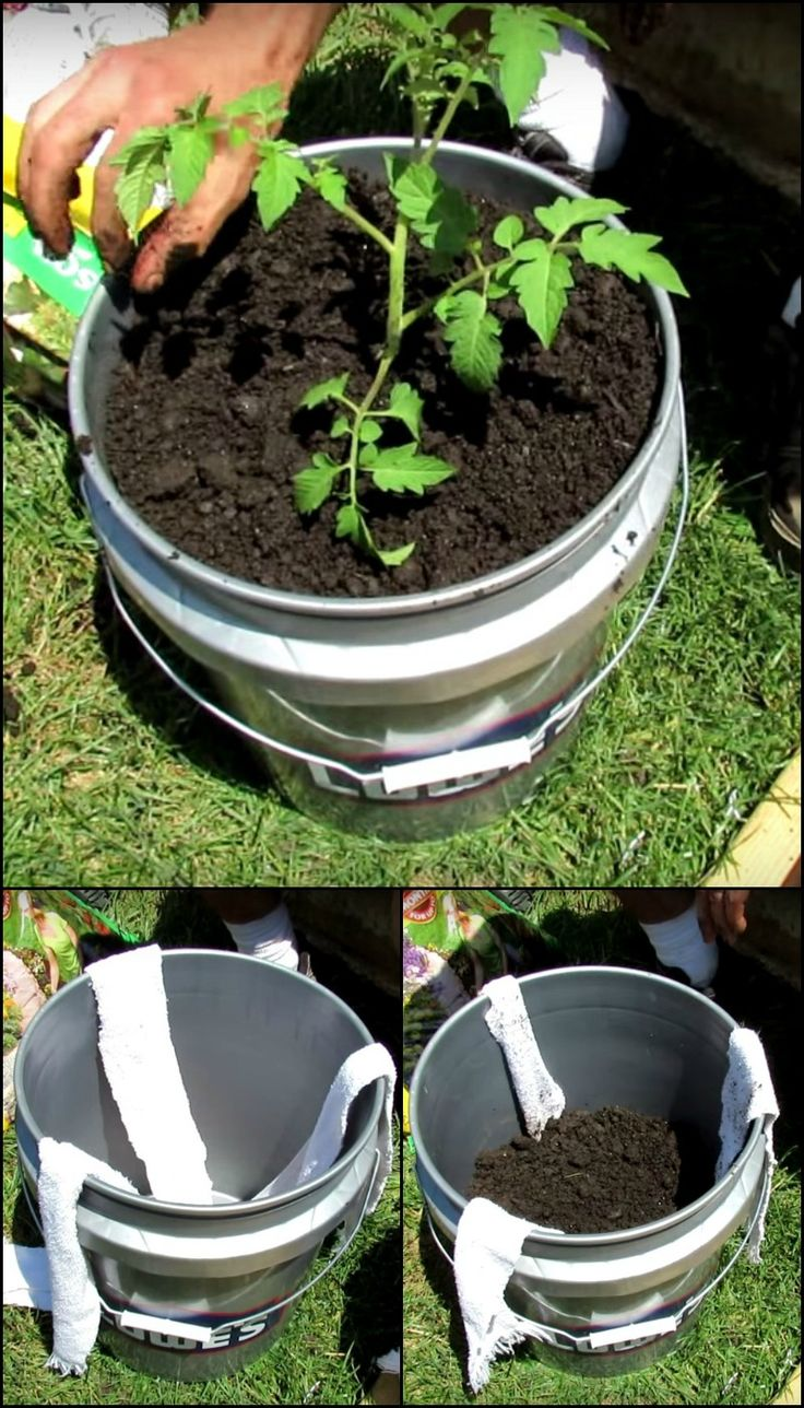 5 Gallon Self-Watering Tomato Container http://diyprojects.ideas2live4.com/2015/10/07/5-gallon-self-watering-tomato-container/ Here's another great idea that makes gardening possible for busy owners. Are you one of them and you want to grow some tomatoes? See how it's made through this video tutorial!