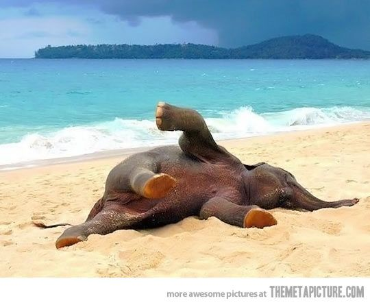 Baby elephant playing in the beach for the first time… I want him.