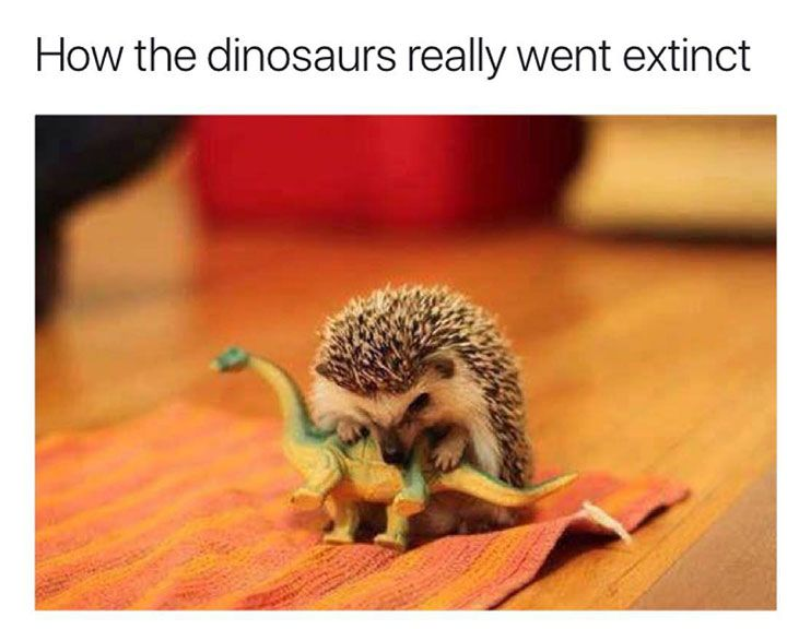 Really Funny Pictures That Make You Laugh Out Loud - 31