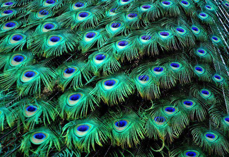 269 Best Background Images Images On Pinterest