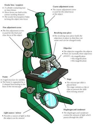 Image result for compound light microscope parts and their functions