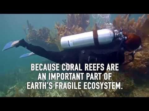 Healthy Corals https://www.youtube.com/watch?v=317hLtDzMjA