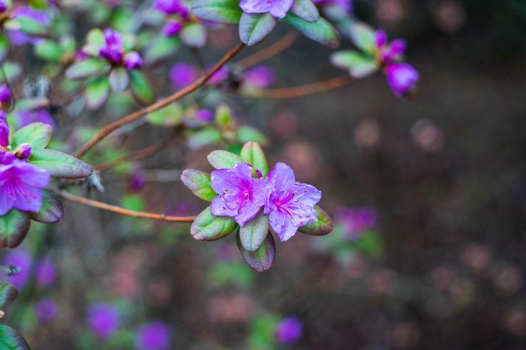 https://flic.kr/p/ShTMy7 | Purple Helios | Sony A7 helios 44m 4 soviet lens