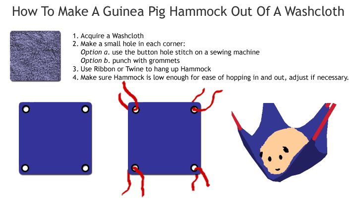 Why would one need a guinea pig hammock?