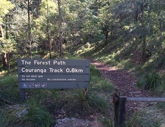 Forest Path Royal National Park. 4.5km almost full loop (add on Lady Carrington Path, 1km for full loop). Parking available. Easy-moderate. No dogs.