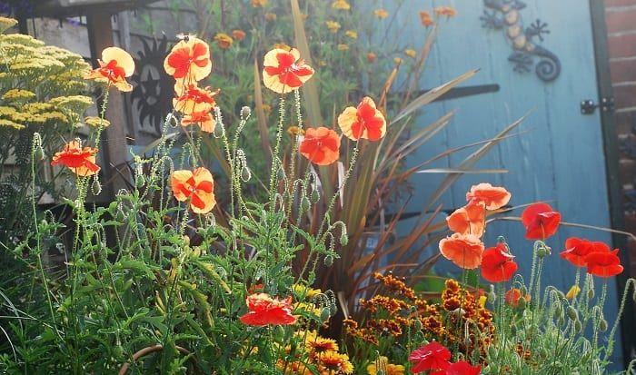 Garden Magic Let S Open The Magical Box Deadly Plants Garden Boxes Plant Nursery