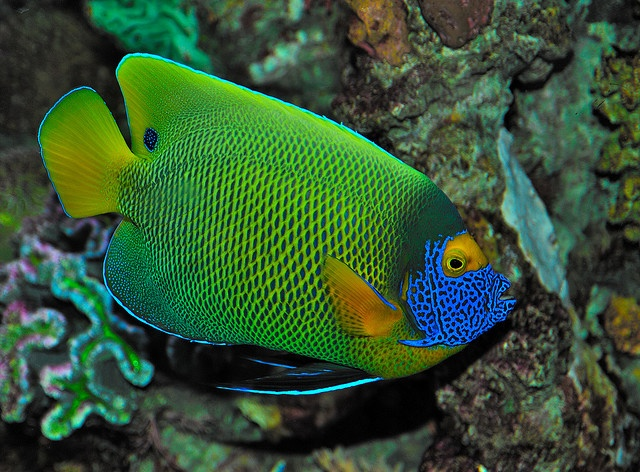 9 best images about national aquarium in baltimore on for Maryland freshwater fish