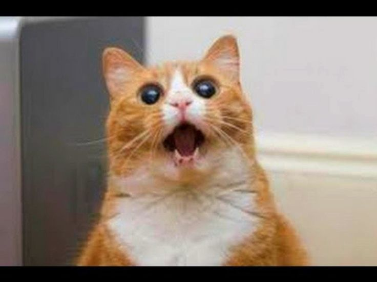 funny cat really in shock