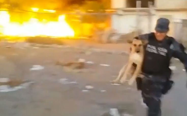 A police officer with the Policia Federal De Mexico picked up a dog near a quickly spreading fire and carried her to safety.