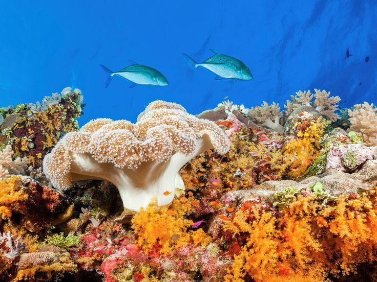Descoperă universul colorat de sub ape: Marea Barieră de Corali din Australia…