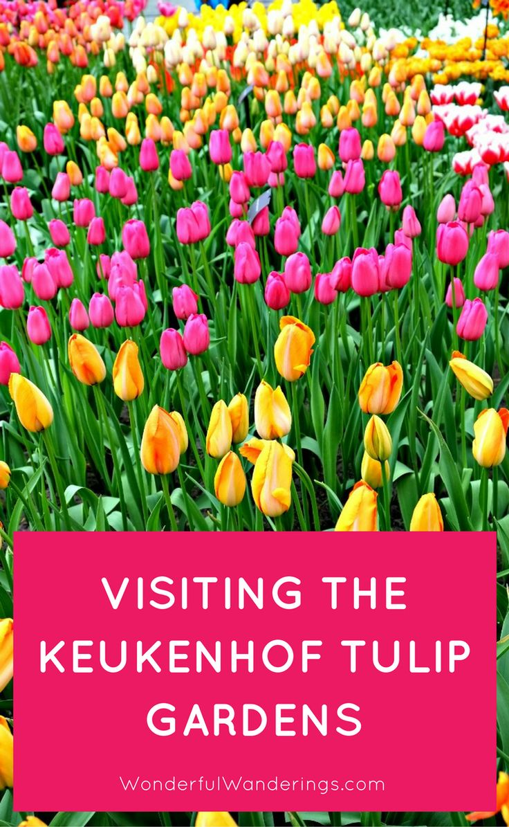 Of tulips cecila san tags flower field photoshop vintage tulips - Keukenhof Gardens In Lisse The Netherlands