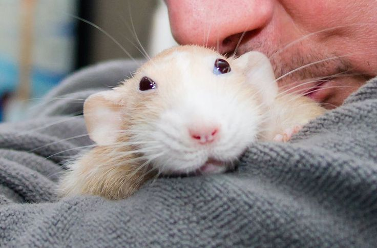 les-aventures-de-marty-mouse-souris-qui-est-en-fait-un-rat-21