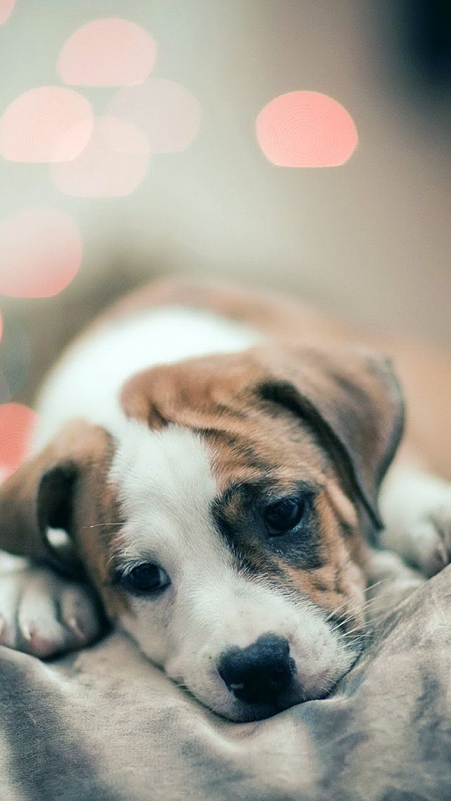 Sad Puppy Dog Bokeh Iphone 5s Wallpaper Iphone 5 Se Wallpapers