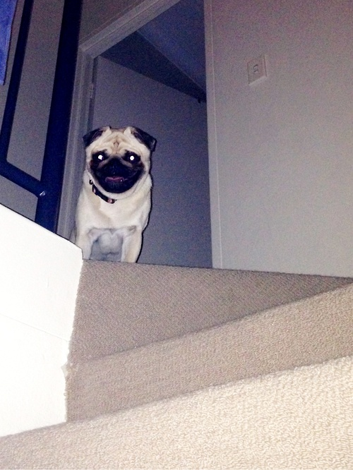 Mr. Pug's plan of tripping you down the stairs to kill you ...