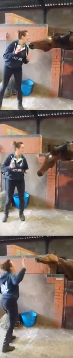 "She Starts Dancing To ""All About That Bass,"" Now Watch What Her Horse Does …I'm CRYING! (VIDEO) #horse #dancing #funny #pets #animals"