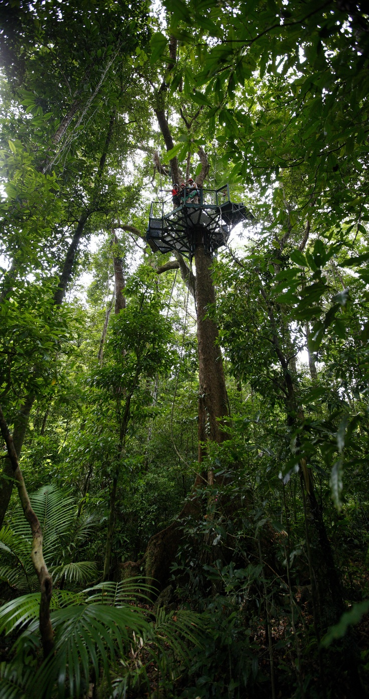 Jungle Surfing Canopy Tours borders the Daintree National Park 2.5 hours north of Cairns & 18 best Australian Zip Lines u0026 Canopy Tours images on Pinterest ...