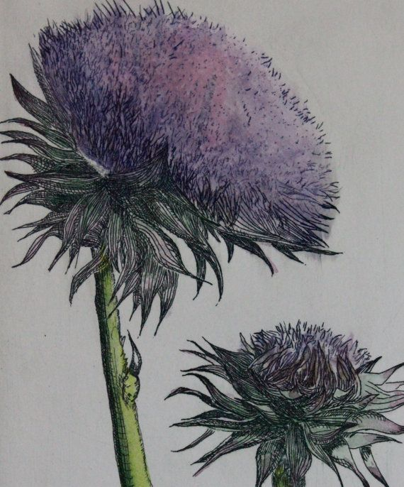 MUSK THISTLE Zinc Plate Etching Drawn Hand Pulled And Colored By Artist