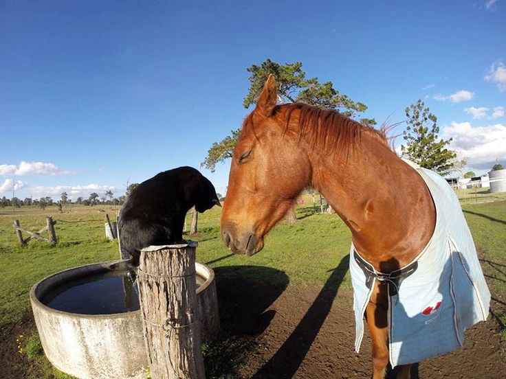 Amicizia a quattro zampe: ecco Morris, il gatto che ama andare a cavallo