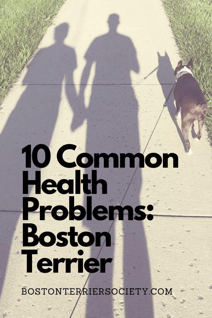 boston terrier puppy health issues