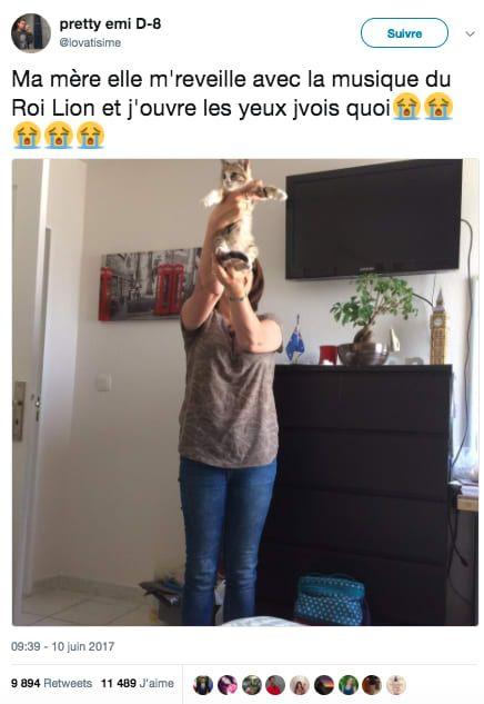 17 tweets que vous ne pourrez comprendre que si vous savez à quel level les chats détestent les humains