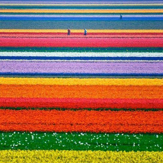 Parque Keukenhof, Holanda. Un lugar único, conocido como el Jardín de Europa. En él se cultivan 7 millones de bulbos (aprox.) al año.... increíble lugar!