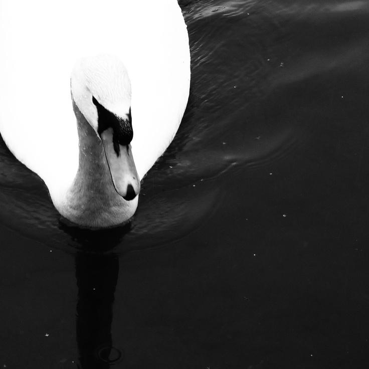 Mg b w photosblack white photographyphoto