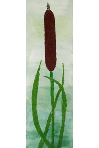 Taita paperi pitkittäissuunnassa kahtia. Leikkaa. Laveeraa tausta, anna kuivua. Piirrä osmankäämi ja väritä.