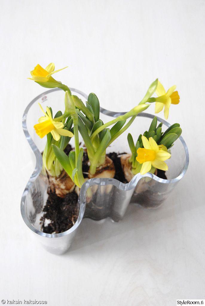 aaltomaljakko,kukkamaljakko,kukka-asetelma,kukat
