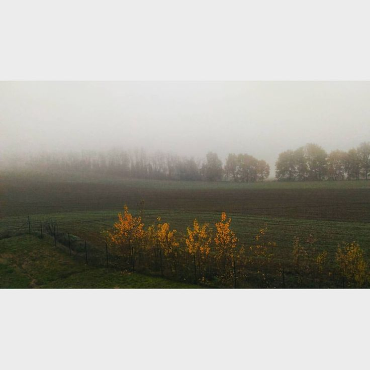 It's a foggy foggy day 🌁 #fog #picoftheday #trees #morning #misty #anotherdayattheoffice #cloudy #country