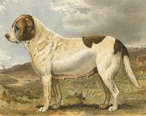 1880 Vera Shaw St Bernard Dog Illustration, Antique Dog - Print - Transfer dog prints onto painted furniture