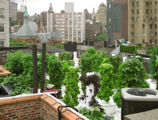 Farm to table: restaurants with gardens -  Bell Book & Candle (NYC)  Six floors up a townhouse on West 10th Street in NYC sits a garden unlike any other in town.  60 aeroponic towers filled with plants, and an electronically timed, energy-efficient water-filtration system; from far away the towers look almost like cacti, grown over with herbs, vegetables and fruits.