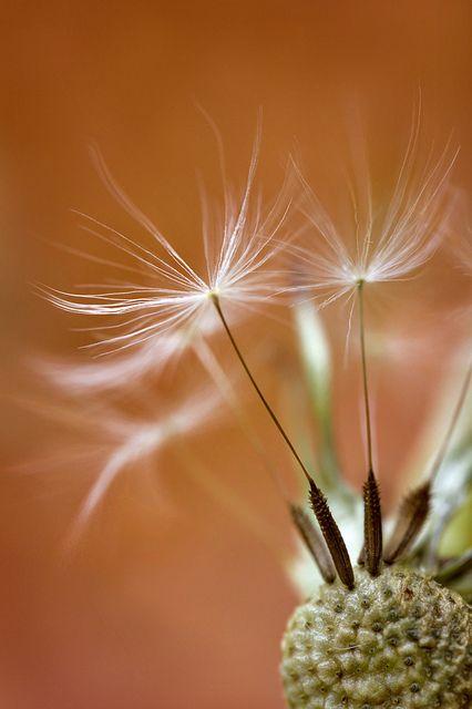 Flower Garden (Seeds by Mandy Disher Florals on Flickr.)