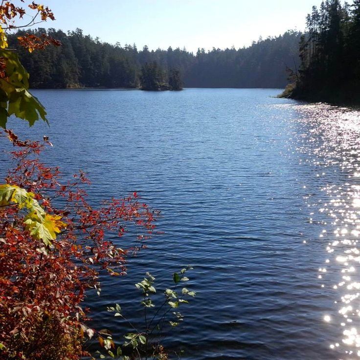 Fall is one of the prettiest times of year to hike the trails on #vancouverisland.  Pick a different one to #explorebc every weekend at https://www.crd.bc.ca/parks-recreation-culture/parks-trails.