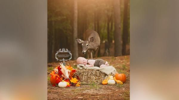 """I think it made it a great work of art,"" photographer Megan Rion of Lake Charles, La., told ABC News. Rion, owner of Imagine That Photography by Megan Rion, said it was on Oct. 20 when she was shooting 1-month-old Connor's autumn-themed photography session in Sam Houston Jones State Park in Louisiana. Connor is the son of Tiffany and Scott Rogers of Lake Charles, La."