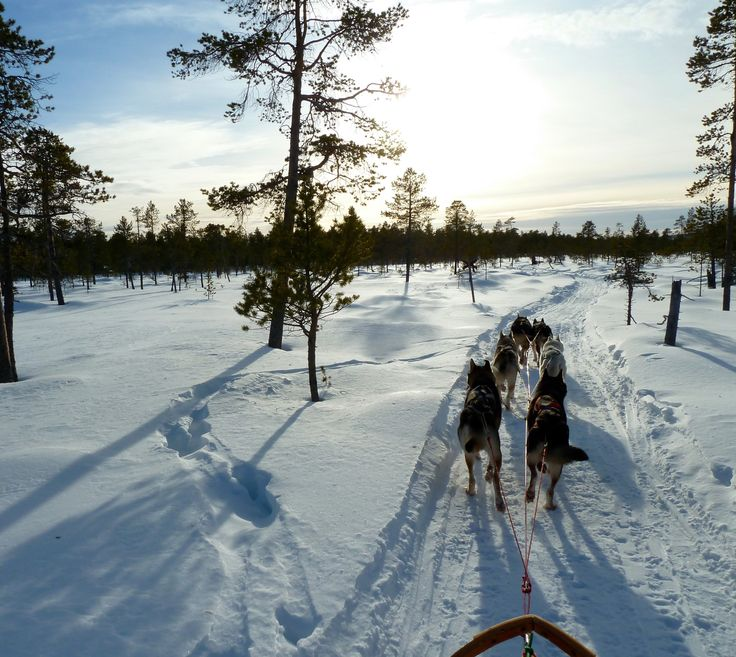 Husky Mushing by Lake #Inari, #ScanAdventures