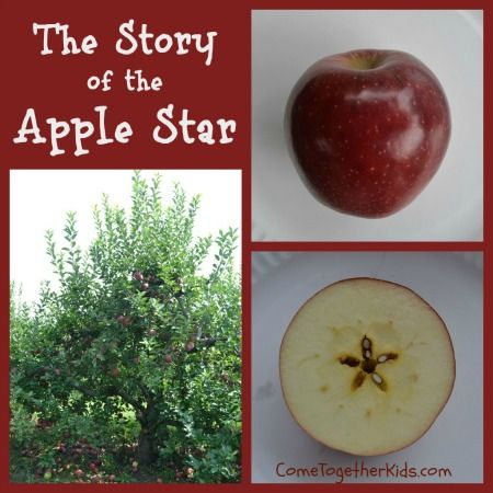 The Story of the Apple Star ~ really cute story which explains why you see a secret, hidden star when you slice an apple in half sideways.