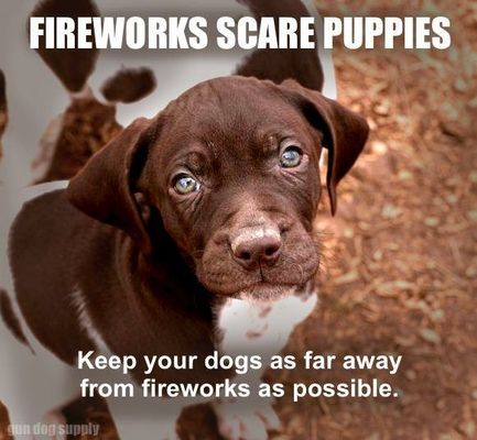 Be Careful with Your Dogs and Fireworks!