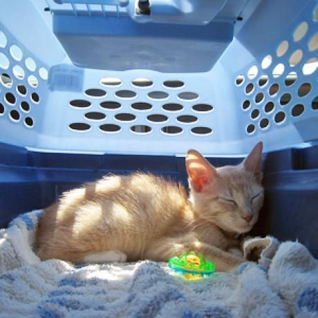 Crate training a cat will help your kitty to accept having to go into a cat carrier for any travel occaision.