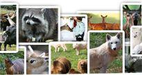Tripsdrill Erlebnispark (wildlife park)
