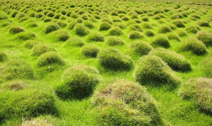 Najpiękniejsze ogrody – trawa ozdobna do ogrodu, trawa dekoracyjna, trawnik fot. Shutterstock #trawa #trawnik #trawa #ozdobna #ogród #ogrody #ogrodnictwo #zielen #trawka #pomyslu #aranzacje #zdjecia #ogrodu #piekne #najpiekniejsze #garden #gardeners #grass #flower #ideas #summer #spring #best #photos #photo #picture #green #house #home #decor #pampasowa