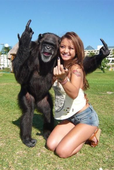 "monkeys pick up bad habits from ""celebrities"":"