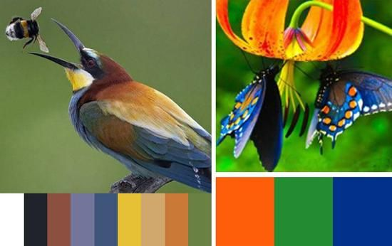 room colors orange and blue | green and dark pastel blue with deep orange color, or bright blue ...