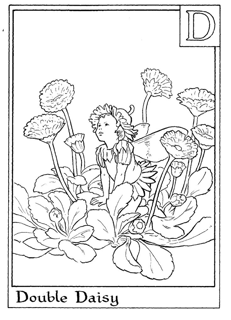 Flower Fairies Colouring : Flower fairy coloring pages sheets fairies