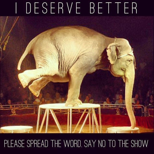 DO NOT VISIT CIRCUSES WHERE THEY HAVE ANIMALS PERFORMING,JUST THINK ABOUT THE ANIMALS RIGHT TO LIFE FOR A MINUTE.PLEASE GO BEHIND THE SCENES,DO THE RESEARCH,ANIMALS ARE NEVER HAPPY IN CAPTIVITY,JUST THE SAME WAY YOU WOULDN'T BE...