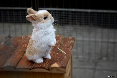 : Tiny Animal, Easter Bunnies, Baby Bunnies, Peter Rabbit, Cute Bunnies, Plays, Carrots, Future Baby, Adorable Animal